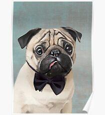 Mr Pug Poster