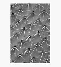 Cactus 5735 Photographic Print