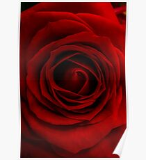 Red Rose macro flower Poster