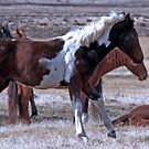 Cautious Mustangs by Judson Joyce