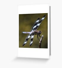 Twelve-spotted Skimmer Greeting Card