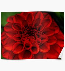 Bright Red flower Macro Poster