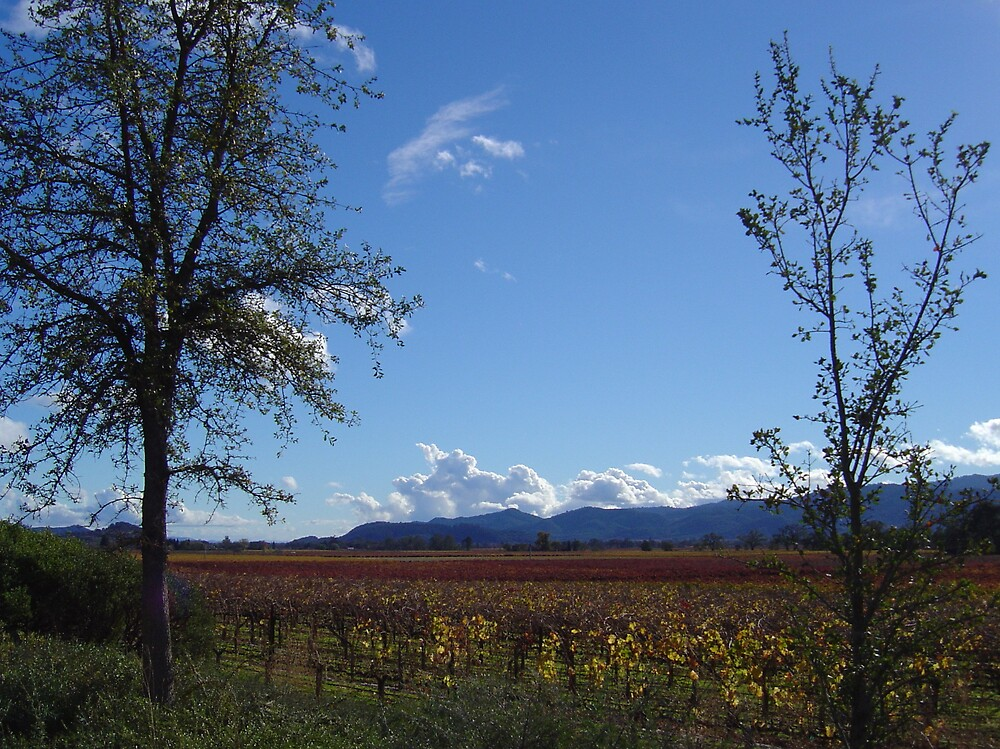 Wine Country II by Jerry Stewart
