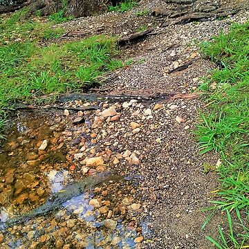 Follow The Dirt Path by GlassTable