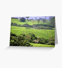 Tea picking-Mulanje Malawi Greeting Card