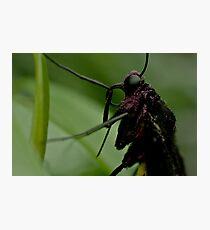 Purple Pollen Photographic Print
