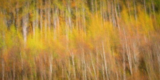 Autumn tones by Geraldine Lefoe