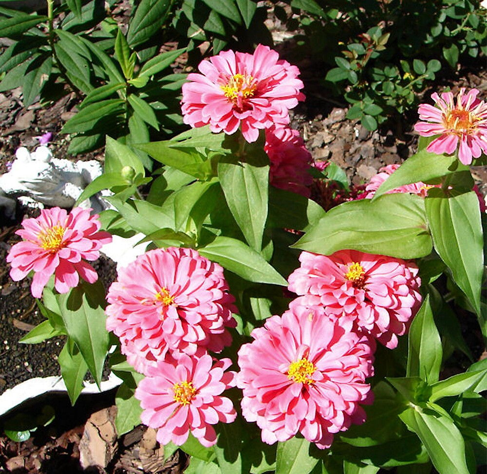 Positively Pink by shadyuk
