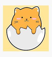 Yellow Cat Egg Photographic Print