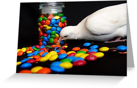 Mmmm... I'm So Sweet - White Dove - NZ by AndreaEL