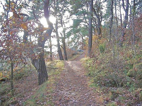 An autumn walk by HELUA