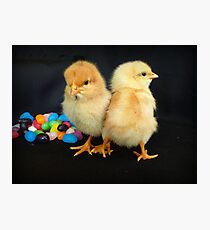 Don't Give Me Beans!!! - Sussex Chicks - NZ Photographic Print