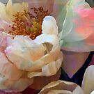 Peonies  by Ruffmouse