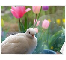 I Have A Sparkling Personality! - White Dove - NZ Poster
