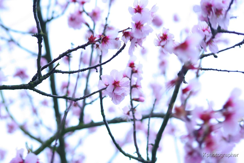 Blossom by Kphotographer