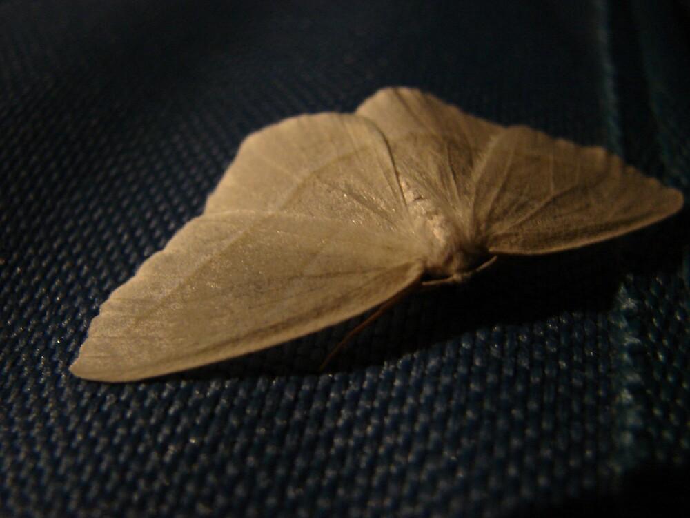 Midnight Moth by ktkins34