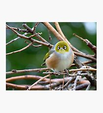 Aww...Don't Be Sad... We Will Be Back - Silver-Eye - NZ Photographic Print