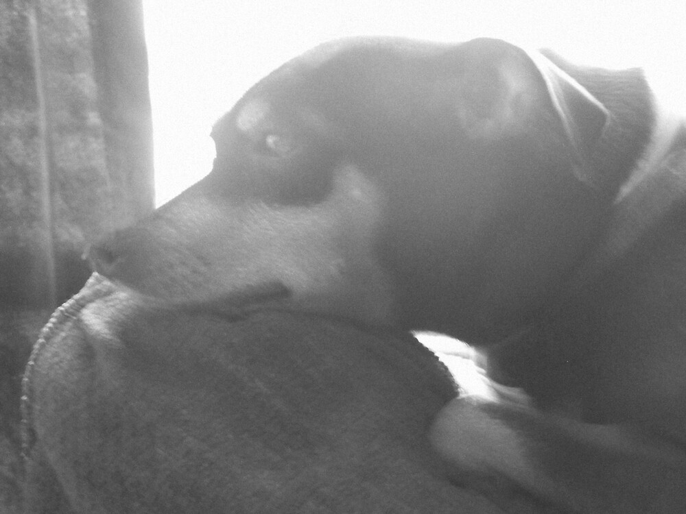 Guard Dog by bigtxn71