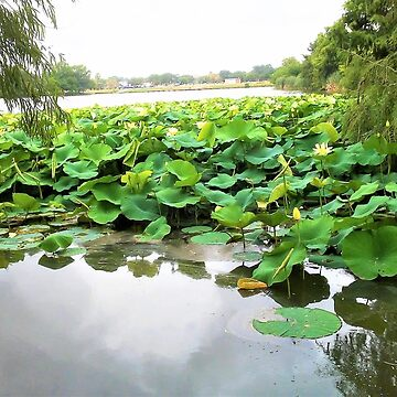 Lake and Lillies by GlassTable
