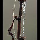 Jewels by Koofer44