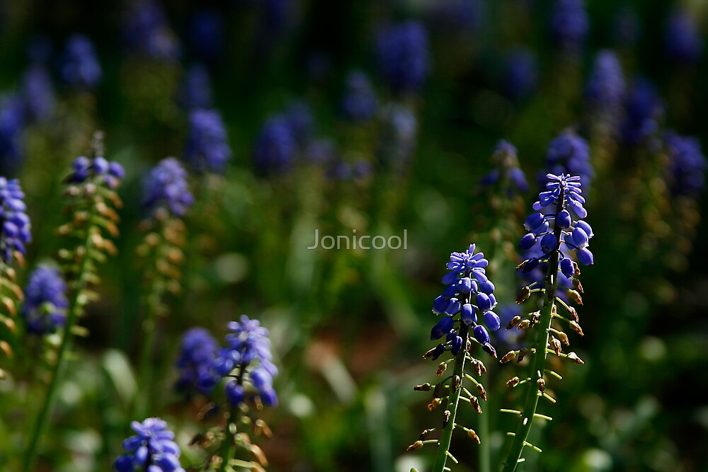 Dreams by Jonicool