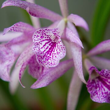 Orchid Couple by Cropfactorgroup