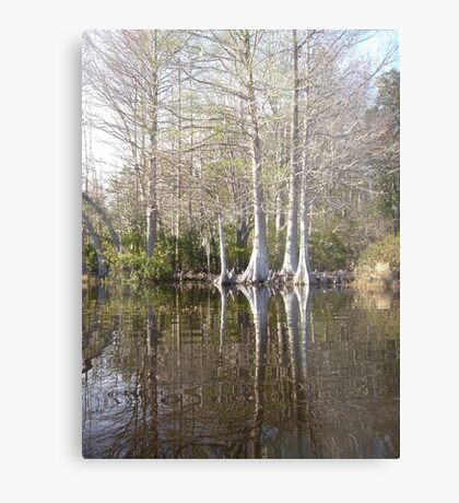 Silver Trees and Knees Metal Print