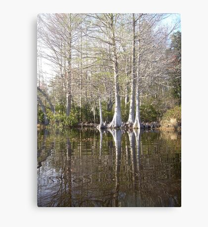 Silver Trees and Knees Canvas Print