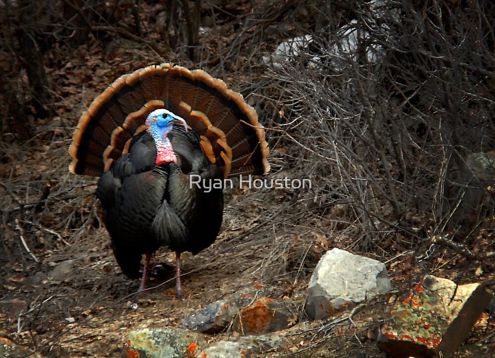 Turkey in the Spring by Ryan Houston