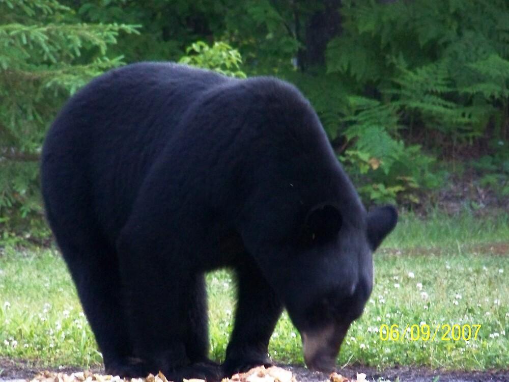 black bear, aprox. 400lbs by floeter1