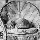 Cats favourite Chair by Danielle Espin