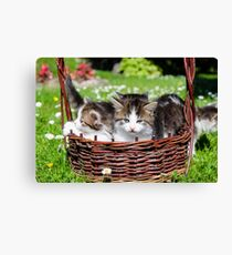 Furry kitten  Canvas Print