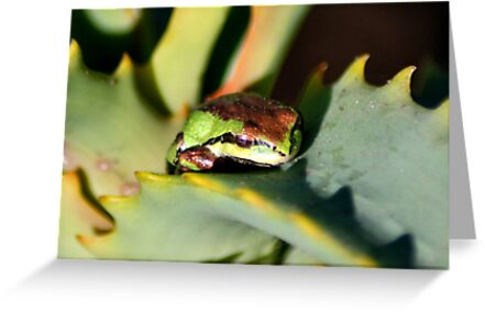 beautiful frog on succulent by Lenny La Rue, IPA