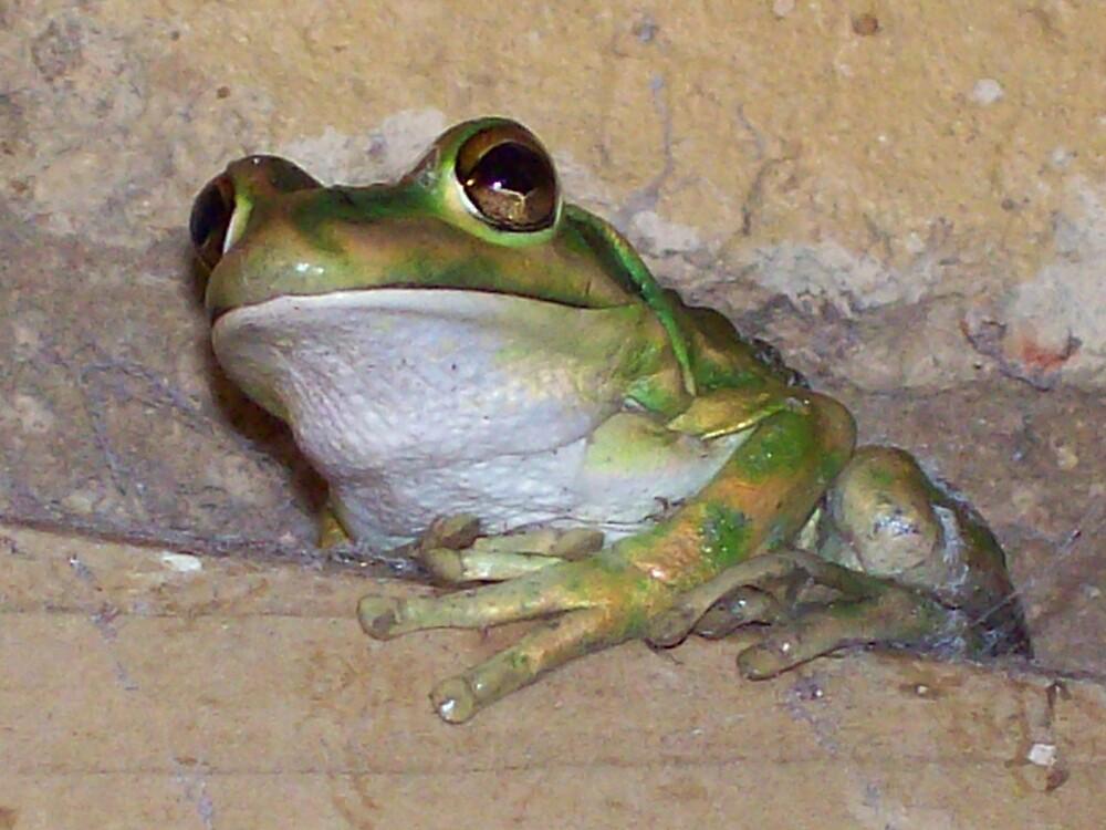 green frog by suerobertson
