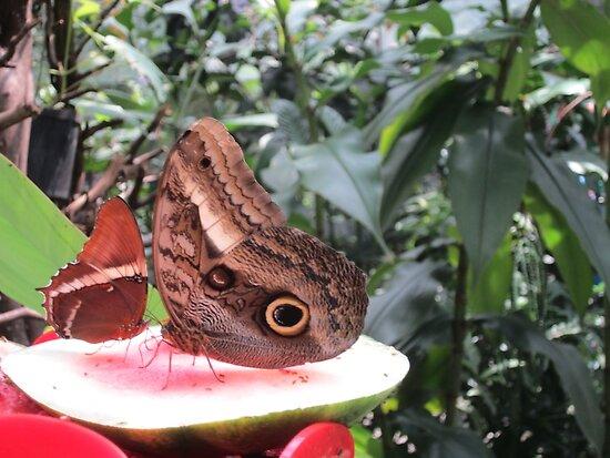 Butterflies  Iguazu Falls - Argentina by EvilGeniusBaby
