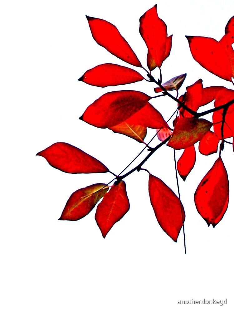 Autumn Reds - Sydney Australia by anotherdonkeyd