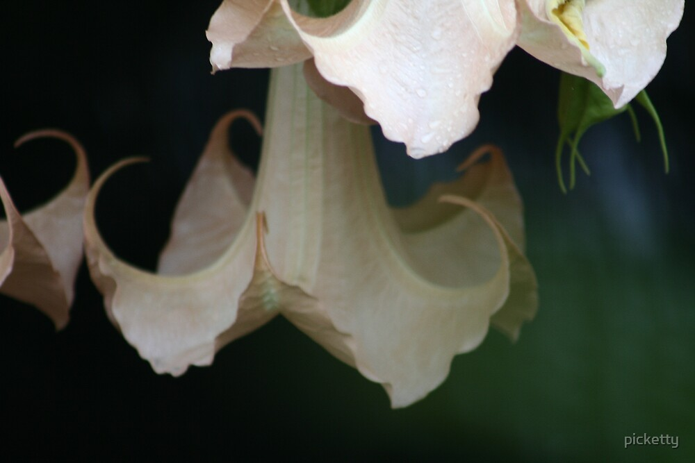 datura again by picketty