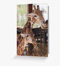 giraffe at the zoo Greeting Card