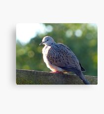 """I've Arrived At """"Tranquillity"""" - Spotted Dove - NZ Canvas Print"""