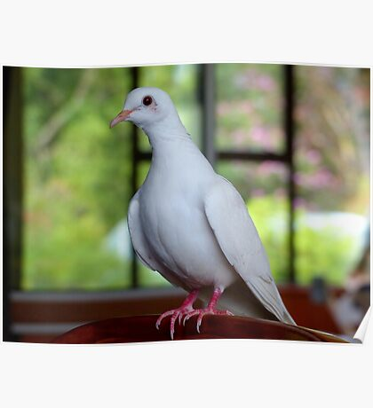 I Am...Love, Innocence, Tenderness & Purity... White Dove- NZ Poster