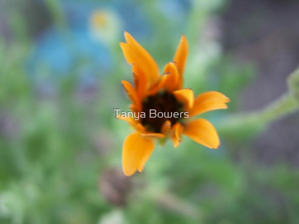 Orange Light by Tanya Bowers