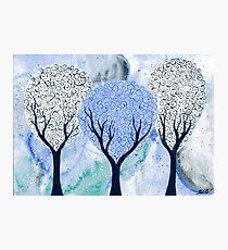Silver White Winter Photographic Print
