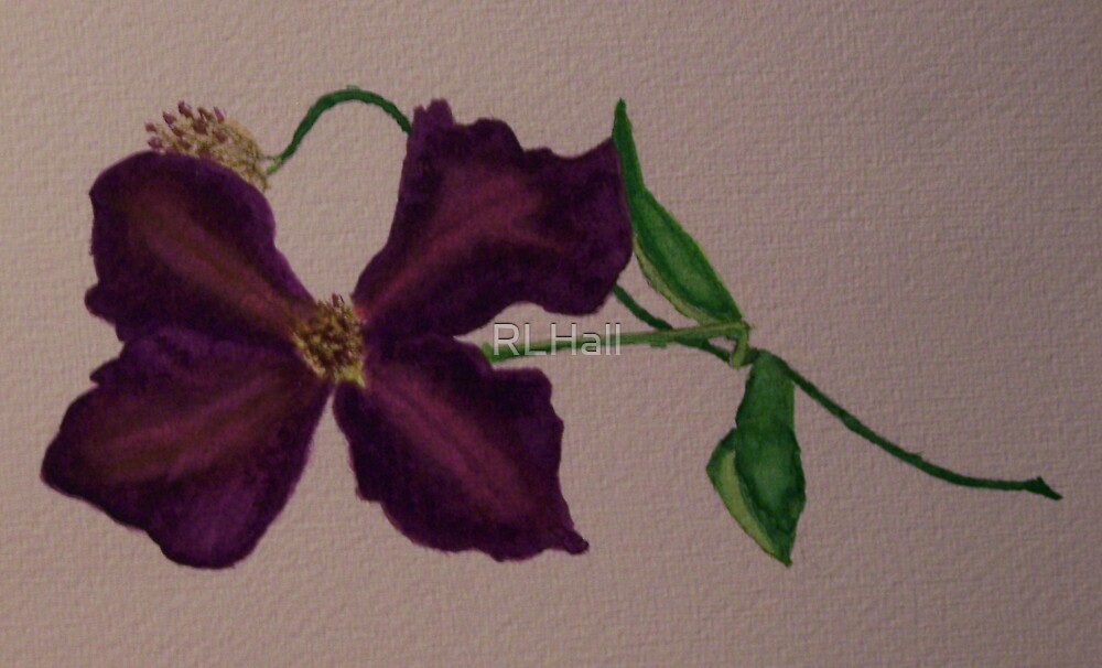 Amethyst Clematis Flower by RLHall