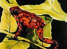 Venezuelan Poison Dart Frog by BarbBarcikKeith