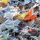 Autumn ends, Winter begins 3 by Linda Lees