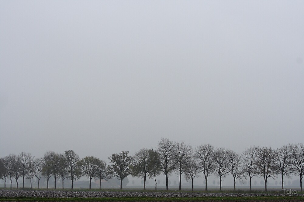 Trees in the mist by Taka
