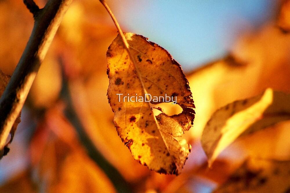 Golden Leaf  by TriciaDanby