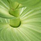 Veratrum Plant Detail by David Kocherhans
