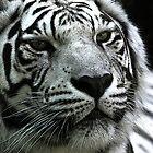 Ivory is thinking by jammingene