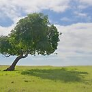 Solitary Tree and Shadow by John Butler